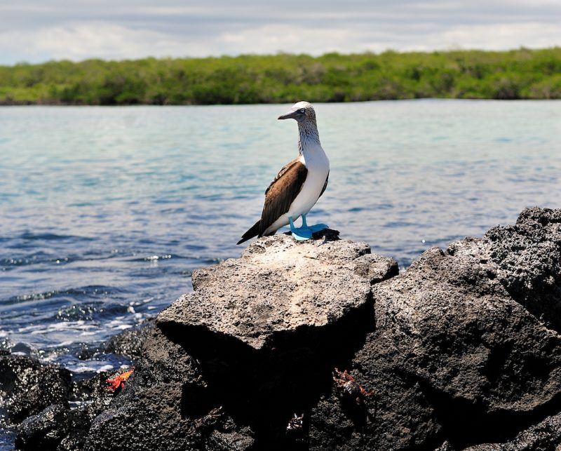 Galapagos Islands Cruise Or Land Tour Good Life Expeditions