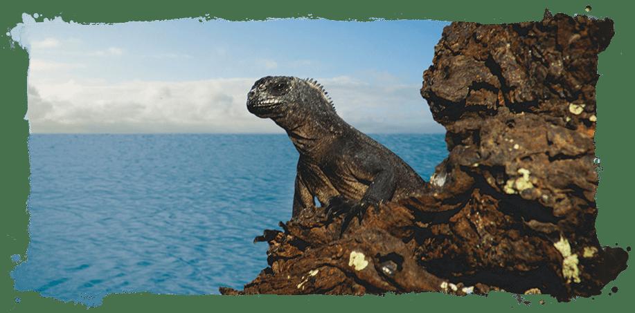Visit Ecuador & Galapagos