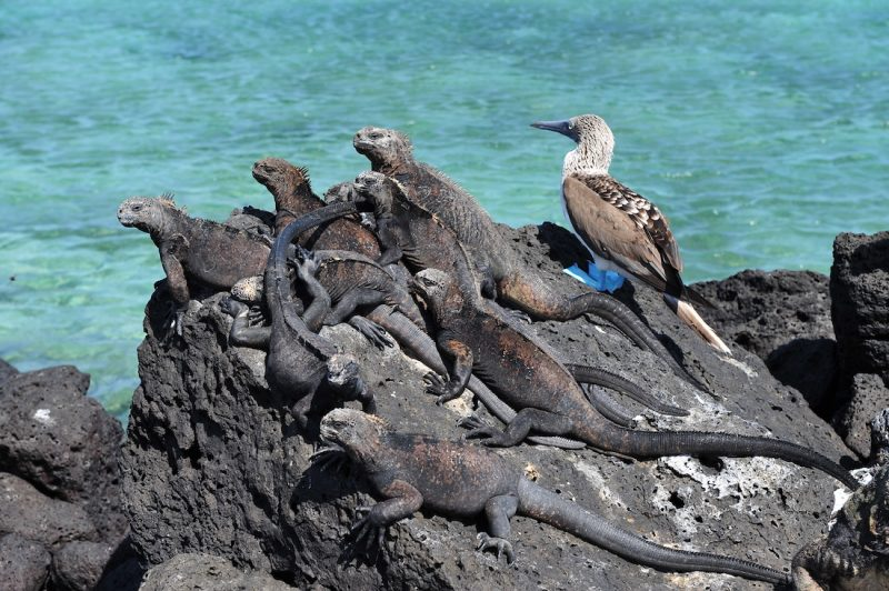 Top 6 Nature Travel Destinations - Galapagos Islands